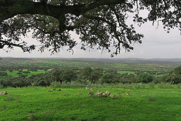 Dehesa de Extremadura en Badajoz