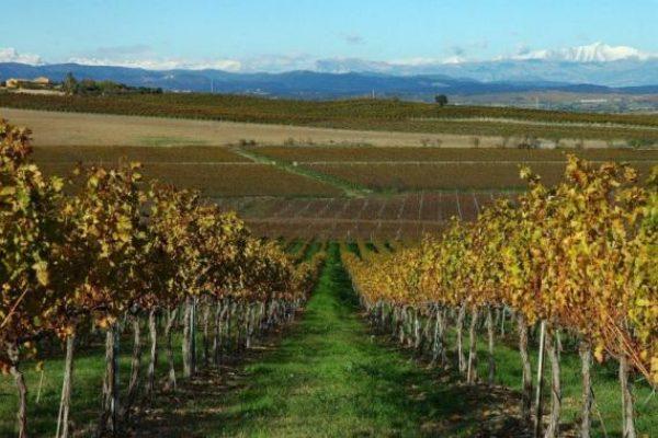 Ruta del vino de Somontano